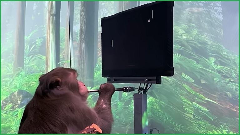 La scimmia controlla il computer con il suo cervello  Era dell'informazione